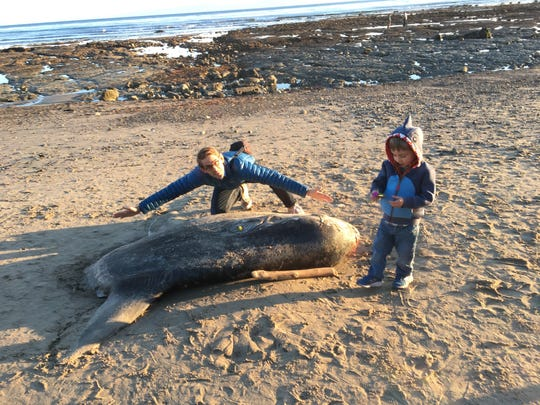 Thomas Turner, who has a wingspan of six feet, and his four-year-old son, Wren, inspect the hoodwinker sunfish along the beach at Coal Oil Point near Santa Barbara, California on Feb. 19. 2019.