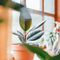 These are the 5 biggest mistakes people make with their houseplants