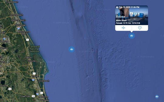 Helena, a 12-foot, 5-inch great white shark that weighs 1,314 pounds, pinged off the coast of the Canaveral National Seashore at 9:06 p.m. Feb. 19, 2020.
