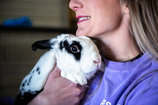 Katie Elliott, founder of Bunny Brigade SC, a rabbit rescue organization, holds Winston, one of the 10 rabbits available for adoption at Izzie's Pond in Liberty, Friday, February 21, 2020.