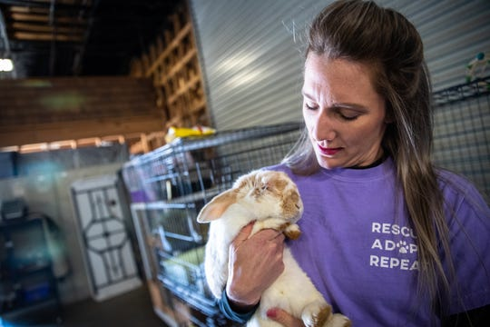 Katie Elliott, founder of Bunny Brigade SC, a rabbit rescue organization, holds Valentino, one of the 10 rabbits available for adoption at Izzie's Pond in Liberty, Friday, February 21, 2020.
