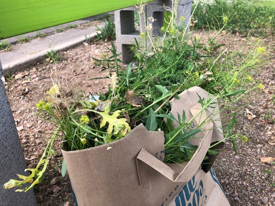 I didn't stop pulling weeds until I had filled a paper bag from a Someburros to-go order and cleared one 10-foot by 10-foot area.