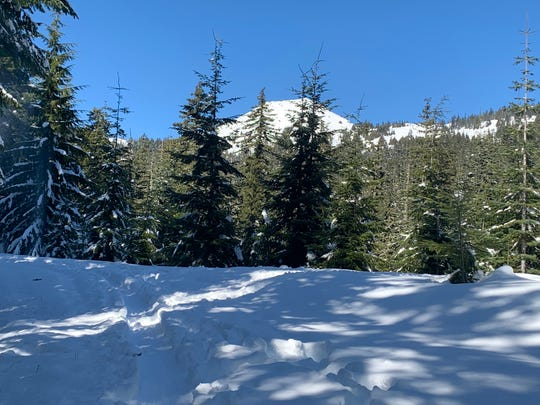 The ski and snowshoe trail that begins at Tombstone Pass Sno-Park features mountain views and forest on a trail that drops downhill at a steady grade.