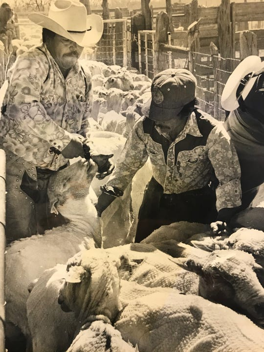 Caterino Carrillo, left, takes care of sheep after shearing on the G.C. Magruder Ranch in Irion County in 1983.