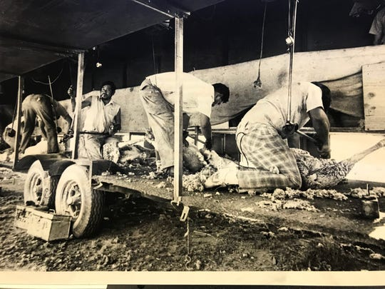 A work trailer carries equipment and tasinques from ranch to ranch during the shearing season, as workers make their way around the region, often working in several states.