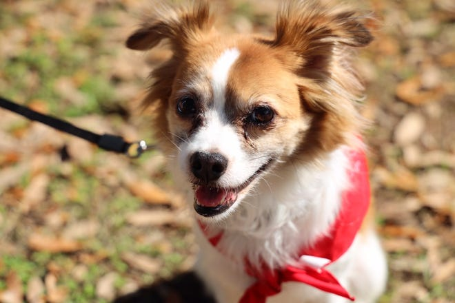 The new county dog park at Lee Vause park is just under 1.5 acres with a half acre small dog area.