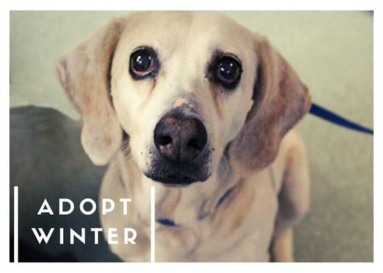 Winter's adoption fee would be $30, which includes her spay surgery, vaccines, & microchip + registration.