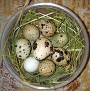 Backyard Farms quail eggs are gaining national and global attention.