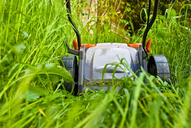A resolution to promote pollinator-friendly habitat would allow Appleton residents to avoid lawn care during May and the first two weeks of June.