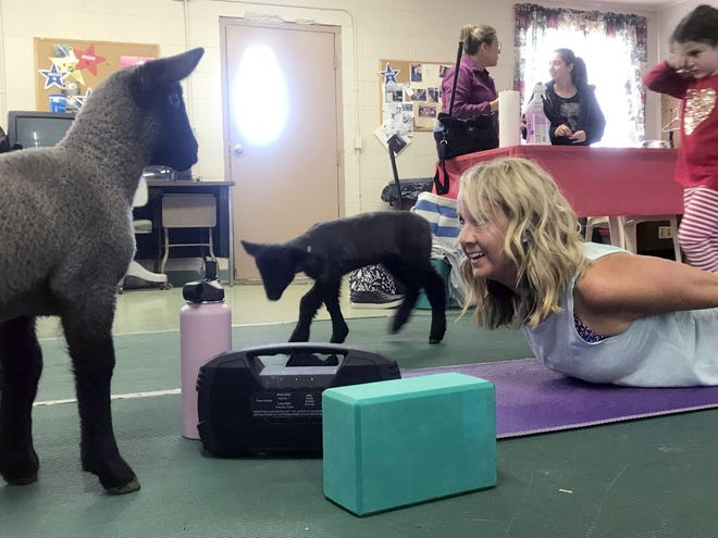 Yoga instructor Kay Smith leads 25 participants in a session with lambs Saturday at the Humane Society Serving Crawford County.