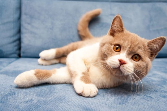 New Jersey State Sen. Troy Singleton, D-7 of Delran, has introduced legislation that would ban declawing cats except in medically necessary cases. It's the legislator's third attempt to get such a bill passed.