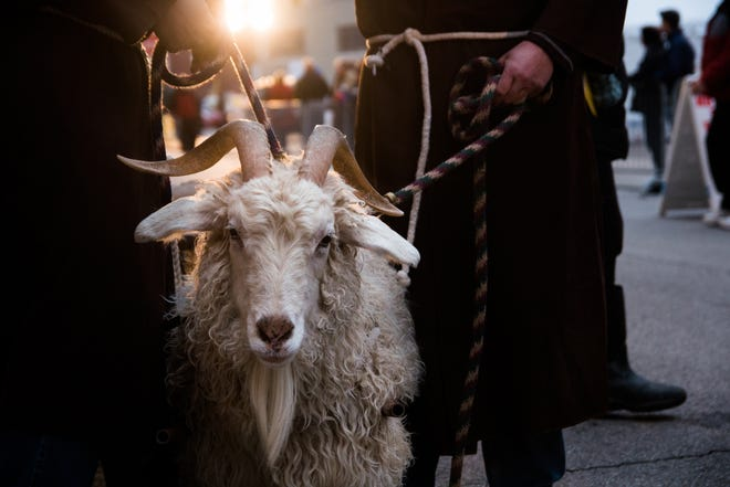 Schnitzel the goat marches in the Bockfest Parade in 2016.