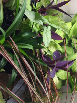 Caring for a house plant is a great way to grow into an avid gardener.