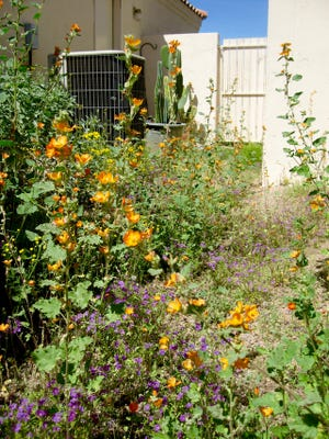 """Joe Schallan, of Phoenix, said the weeds don't know they're weeds. """"If they have a pretty flower, we re-christen them,"""" he wrote."""