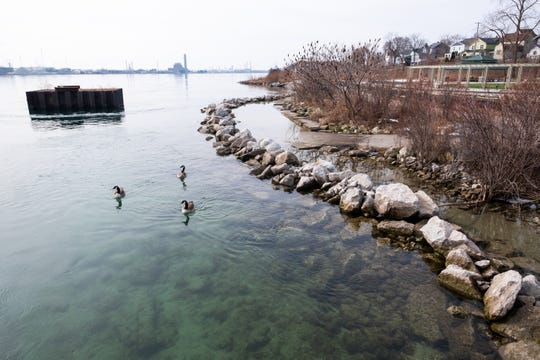 Geese swim along rocks set into the St. Clair River Monday, Feb. 24, 2020, in Port Huron. The Blue Water River Walk received a round of shoreline armoring in 2019, and more protection is planned for the river's banks in 2020.
