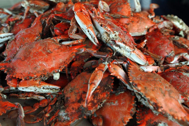 In a typical year, 500 H-2B seasonal workers are needed for Maryland?s 20 licensed crab picking houses.