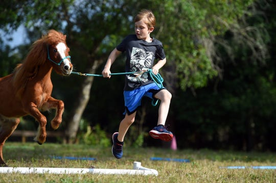 Gabriel Scoboria, 8, leads Harmony, a mini chestnut horse, through an obstacle course on Thursday, Feb. 20, 2020, at Harmony Hope Stables in Palm City.