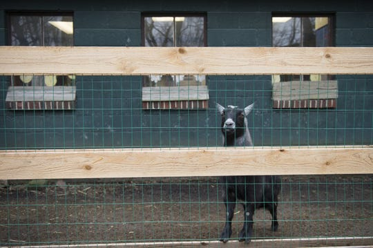 The Paws Discovery Farm in Mount Laurel, home to goats, chickens, alpacas and many other farm animals, has closed for good. Its owners cited the mounting costs of running a farm, along with an increase in the minimum wage.