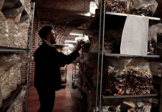Quentin Declerck, from Le Champignon de Bruxelles, inspects the progress of shelves of mushrooms growing in various substrates at the company's urban farm in the cellars of Cureghem in Brussels.