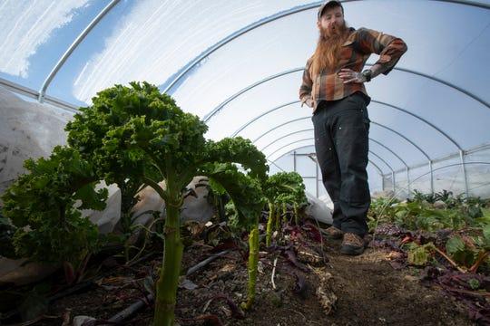 Farmer director Caleb Trainor stands near some curly kale in a hoop house Feb. 20 2020 at Wellspring Organic Farm.