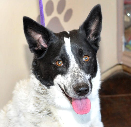 Meet 5-year-old Lilly. She is listed as mixed but she gets along with just about everybody and dogs. Lilly is looking forward to meeting you at the Wichita County Humane Society on Old Iowa Park Rd.