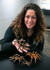 Kelli Walker, senior keeper at the Cincinnati Zoo and Botanical Garden's World of the Insect exhibit, shows off some of the molts from tarantulas. Adults molt every year, juveniles molt as they grow.