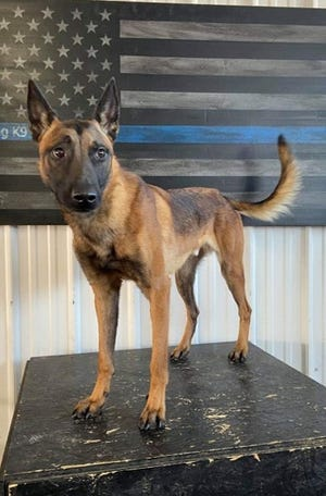 K9 Riggs will be joining the St. Francis Police Department in October 2020.