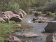 Chandler's Veterans Oasis Park a hidden gem