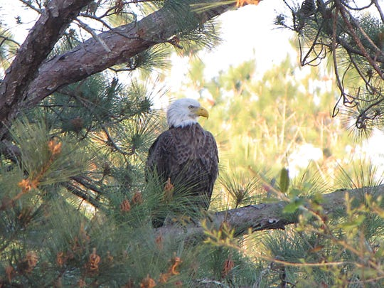 Lake Becky attracts a variety of wildlife, including this eagle which often watches the area for its next meal.