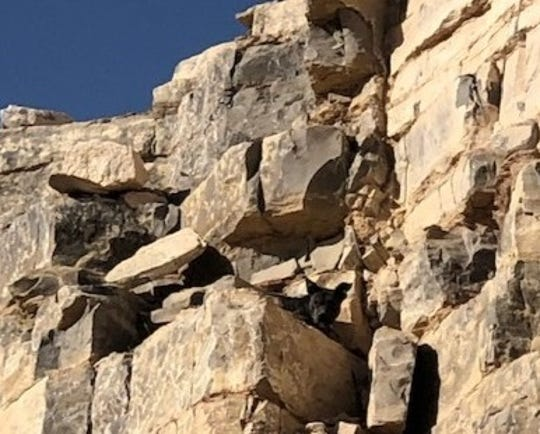 A dog stuck on a cliff in a rock quarry near Montana Vista was rescued by deputies after being trapped for three days.