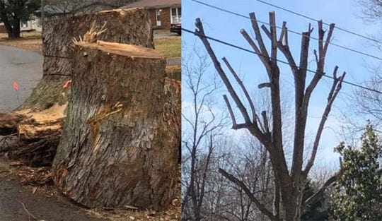 Spring cleanup don'ts: During the annual Spring Cleanup, the Clarksville Street Department will not pick up tree stumps, tree limbs from topped trees, or limbs trimmed by a commercial company.