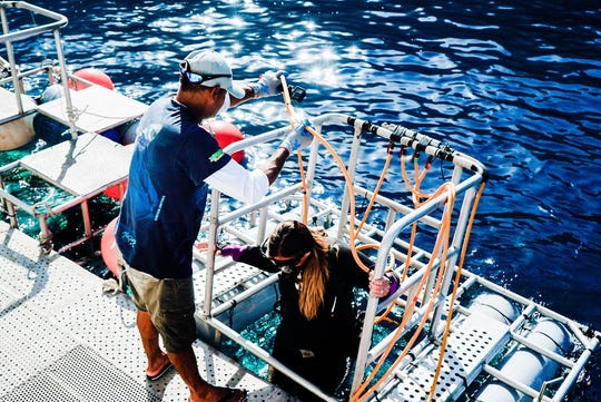 Lauren Chesrown is lowered into a shark cage during the Great White Shark Cinema Science Expedition off Guadalupe Island, Mexico.