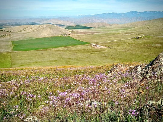 The view from Lewis Hill Preserve on Thursday, Feb. 27, 2020 shows a carpet of wildflowers despite the Sierra foothills' dry winter.