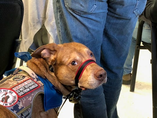 Steve dog Bruce, a 7-year-old Catahoula, and his owner Jeff Jardine were in attendance at a West Texas VA Health Care System town hall Thursday in Abilene.