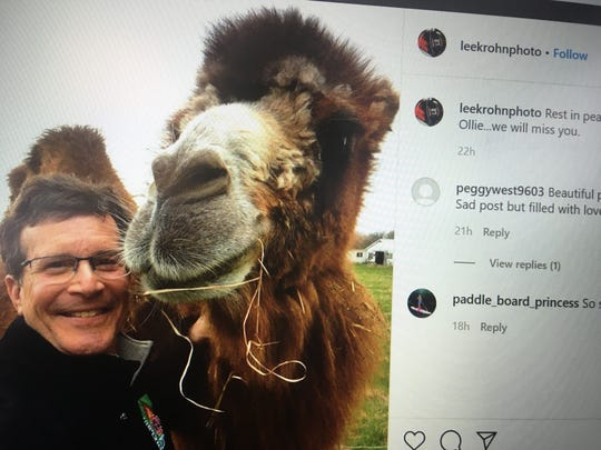 Lee Krohn, Shelburne's Town Manager, posted a photo posing with Ollie the camel, a Ferrisburgh icon, who died in February 2020.