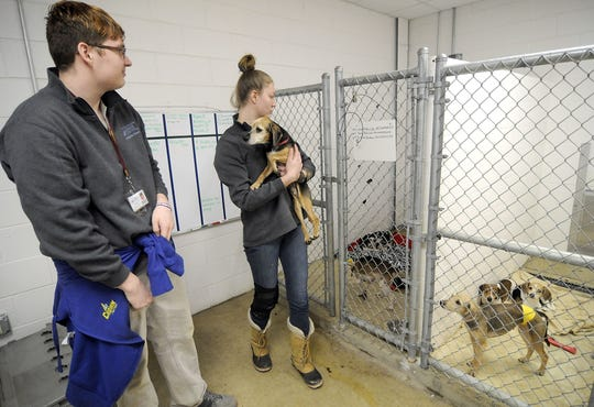 Ashland County West Holmes Career Center students Spencer Weber and Autumn Spring check on some of the 52 dogs rescued from an Ashland home last week.
