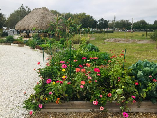The Rotary Community Garden, which recently began conducting Community Days on Thursday mornings, encompasses 52 separate plots next to city hall.