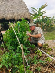 Hope Clubhouse member Gary Meyer maintains some of the lettuce, pepper and tomato plants in one of the organization's 11 plots at the Rotary Community Garden.