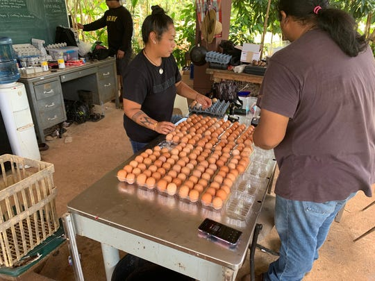 Workers at Triton Farm, a demonstration farm operated by the University of Guam, package some of the fresh eggs gathered that day from the site's 1,000 laying hens.