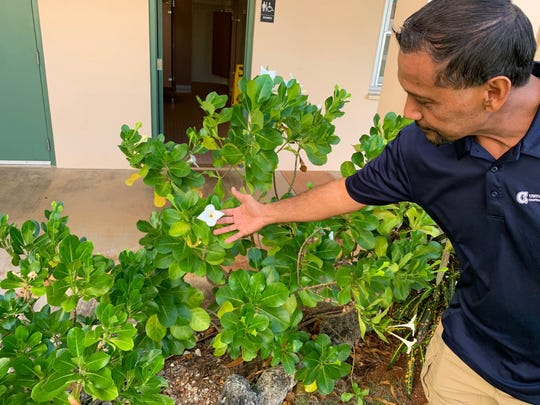 Roland Quitugua, an extension agent with the University of Guam, on Feb. 17 displays a Guasali flower growing outside his office at the Mangilao campus.