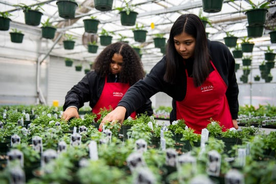 Amayia Lyons, 19, and Gisell Gomez, 17, rotate the plants at Liberty Technology Magnet High School  in Jackson, Tenn., Thursday, Feb. 20, 2020.