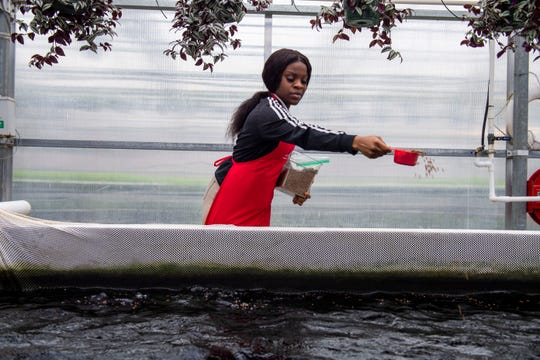 Latrice Smith, 17, sprinkles fish food inside the greenhouse at Liberty Technology Magnet High School  in Jackson, Tenn., Thursday, Feb. 20, 2020.