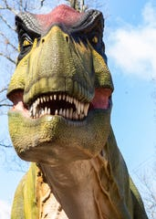 A closeup view of a Tyrannosaurus rex at Memphis Zoo Dinosaur Exhibit on Friday, February 28, 2020.