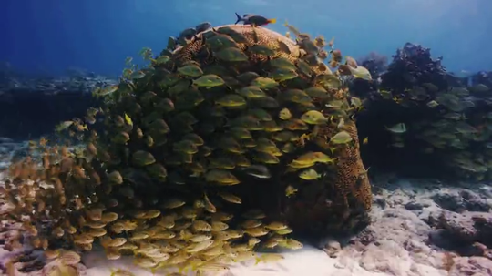 United Way Joins the Iconic Reefs Project