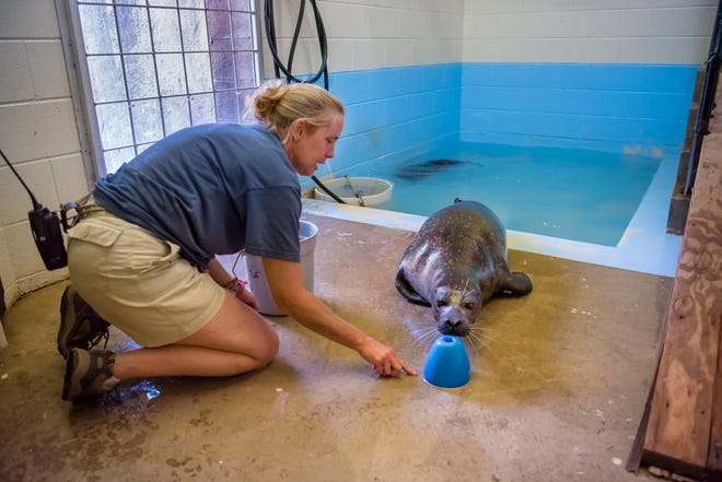 In the off-exhibit holding areas, there are saltwater baths for harbor seals. The holding area will be open for tours during the zoo's Behind-the-Scenes weekend.