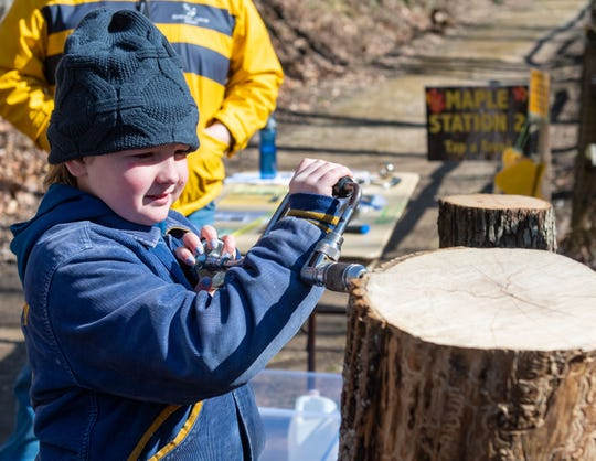 Aubrielle Bonner, 10, drills a hole into a tree during the York County Department of Parks and Recreation's Maple Sugar Festival Days at Nixon County Park. The event is repeated on March 7.