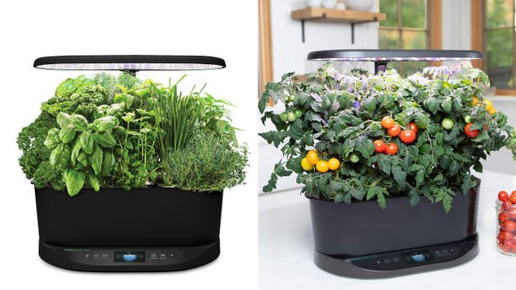 An indoor garden for the wannabe green thumb.