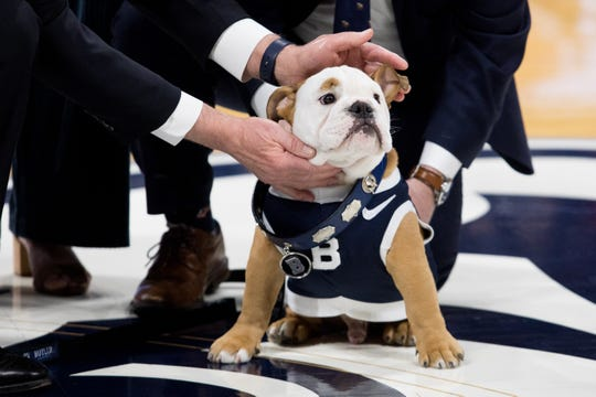 The Butler Bulldog collar is passed on to Blue IV, the new Butler Bulldog Mascot, during the passing of the collar ceremony before the men's basketball game at Hinkle Fieldhouse in Indianapolis, Saturday, Feb. 29, 2020. Butler defeated DePaul 60-42.