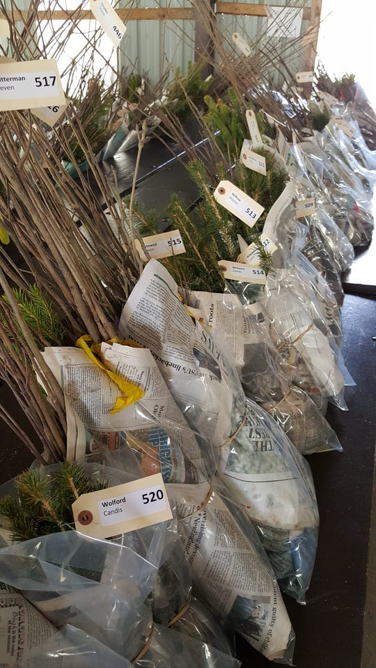 The York County Conservation District is holding its annual Tree Seedling Sale, with orders accepted through March 23.