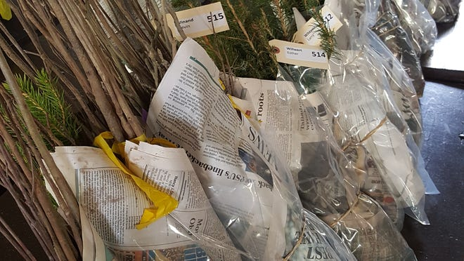 The York County Conservation District is holding its annual Tree Seedling Sale, with orders accepted through March 15.
